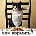 корм кошки