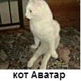 кот Аватар