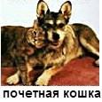 почетная кошка
