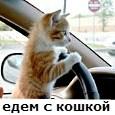 перевозка кошек