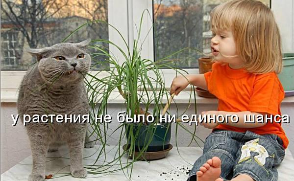 http://www.caticat.ru/wp-content/uploads/2012/12/veselie-koshki.jpg