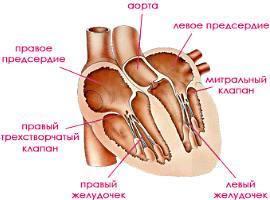 http://www.caticat.ru/wp-content/uploads/2013/01/serdce-koshki.jpg