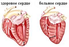 http://www.caticat.ru/wp-content/uploads/2013/01/serdce_koshki.jpg