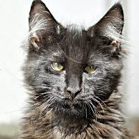 кот с отрезанными усами