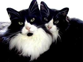 кошки-родственники