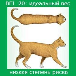 степень ожирения кошки -1