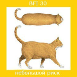 степень ожирения кошки -2