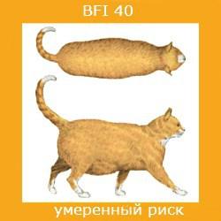 степень ожирения кошки -3