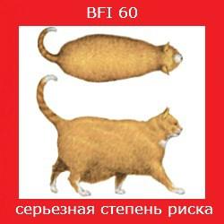 степень ожирения кошки -5