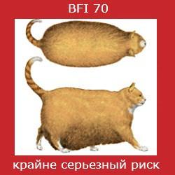 степень ожирения кошки -6