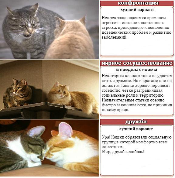 поведение кошек в доме